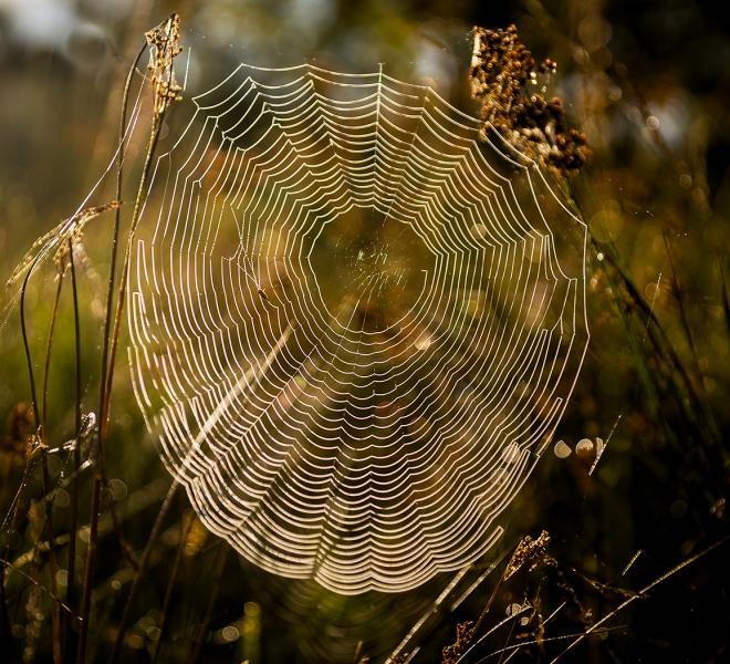 Dewy cobweb_Mike Lown