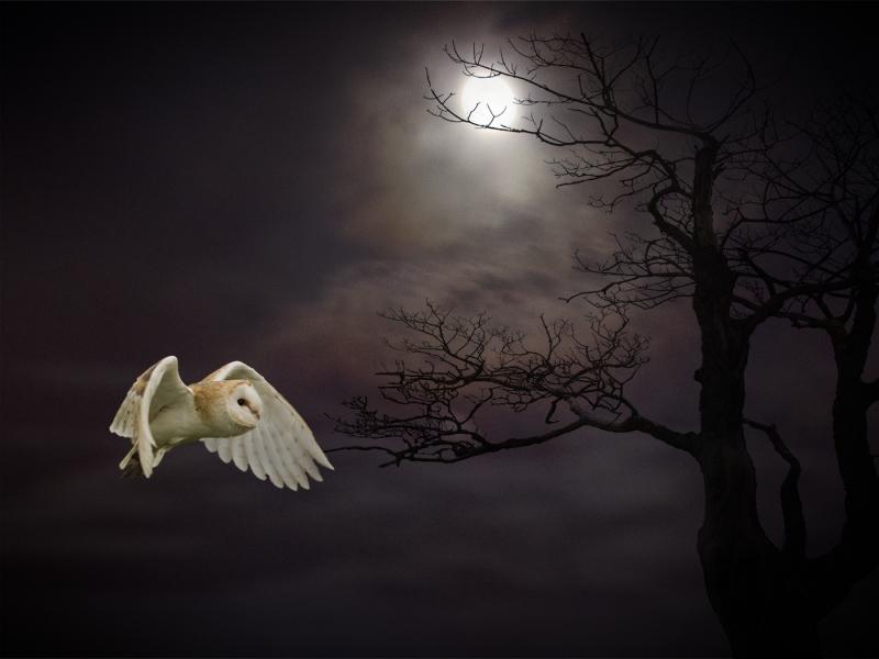 Night_Prowler.jpg