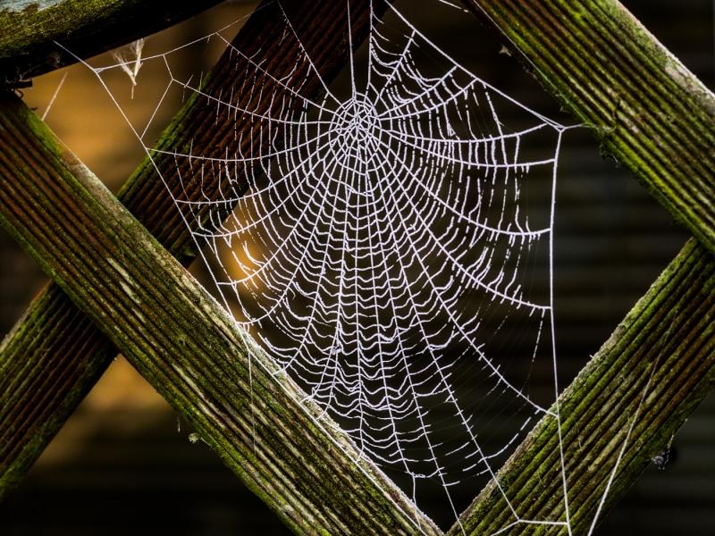 frozen_web.jpg
