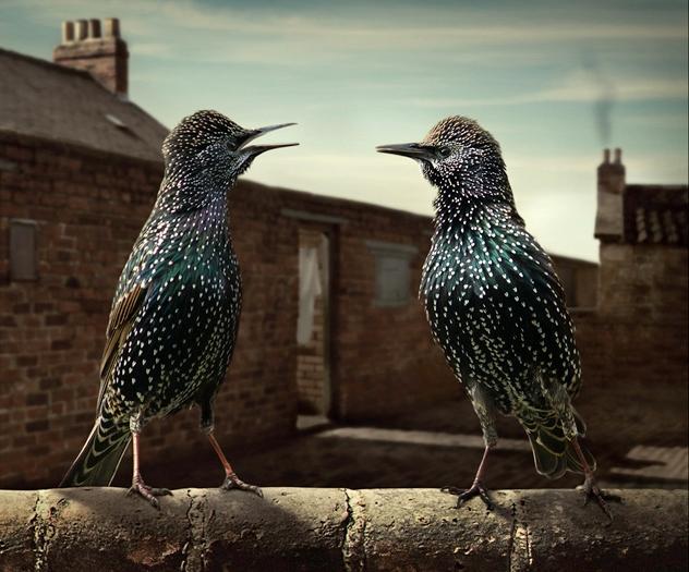 Neighbourhood_gossips