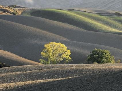 Sunlit-Tree