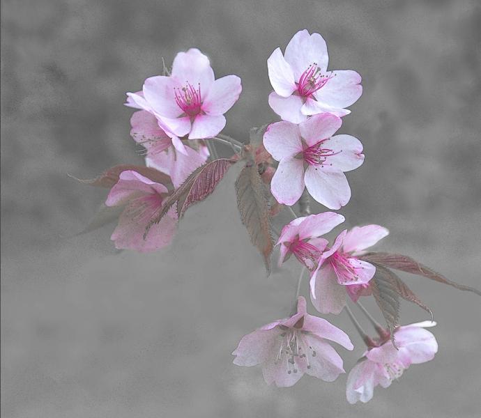 Blossom_2.jpg