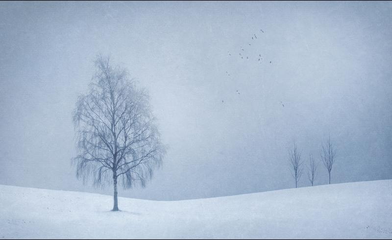 Winter_blues.jpg