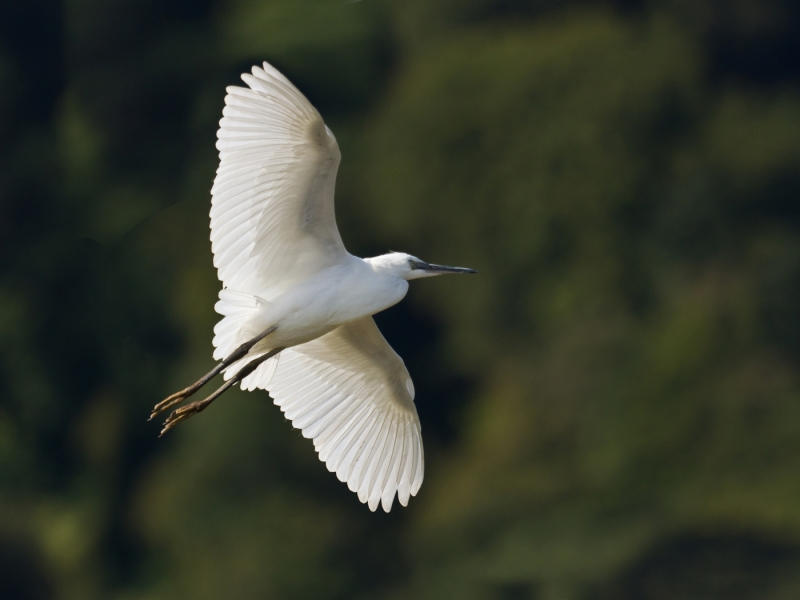 Little Egret 1 – 19 points
