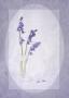 1_Annette-Hockney_Bluebells
