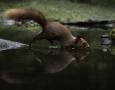 1_Bruce-Kendrick_Red-Squirrel