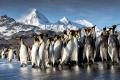 1_Primary-User_Emperor-penguins-South-Georgia