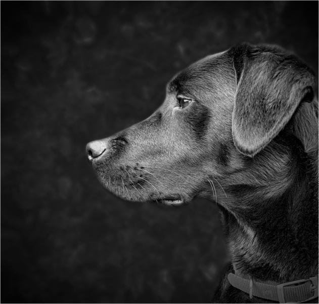 Melancholy-Dog