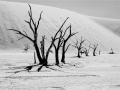 12-Line-of-Trees-Dead-Vlei