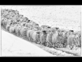 44-Sheep-in-the-Cairngorms