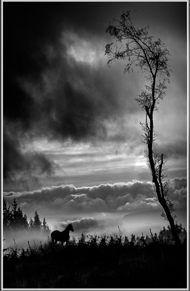 Horse_in_the_Wilderness