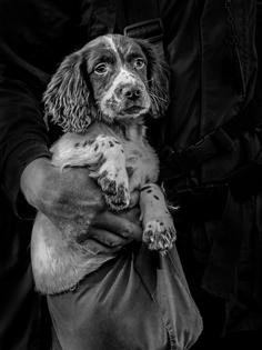 Gundog_in_the_Making - Lisa Mullins_20
